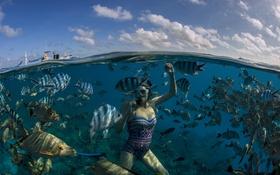 Картинка море, девушка, рыбы