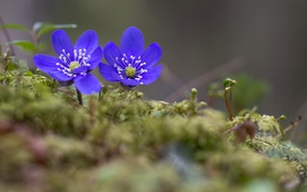 Обои природа, весна, цветы
