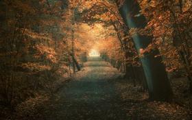 Обои лес, осень, дорога