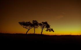 Картинка деревья, поля, силуэт, сумерки