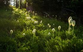Обои трава, цветы, Природа