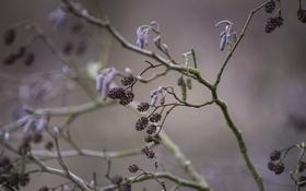 Обои природа, ветка, листья