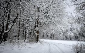 Обои зима, дорога, лес, снег, деревья, фото, кусты