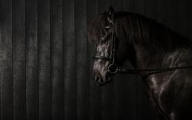 Картинка стойло, фон, конь