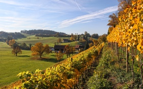 Обои деревья, дома, Швейцария, долина, склон, виноградник