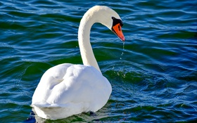 Обои птица, клюв, вода, лебедь, шея