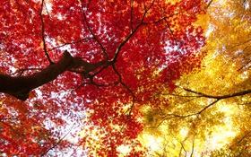 Обои осень, листья, дерево, ствол, крона, багрянец
