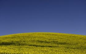 Обои небо, буря, линия, холм, поле цветов