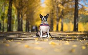 Картинка осень, взгляд, друг, собака