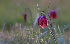 Обои природа, весна, цветок