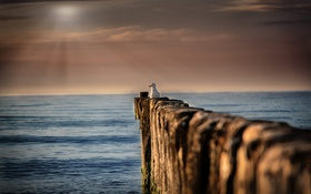 Картинка море, небо, птица