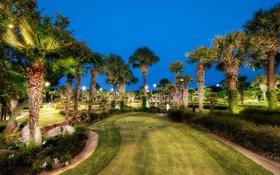 Обои свет, пейзаж, пальмы, выдержка, Парк