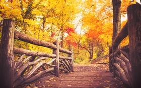 Обои осень, лес, листья, деревья, мост, путь, листва