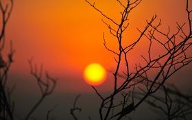 Картинка небо, солнце, закат, ветка, силуэт