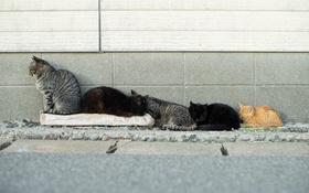 Обои семейка, стенка, коты, отдых
