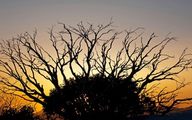 Обои закат, ветки, дерево, Виктория, силуэт, Австралия, зарево