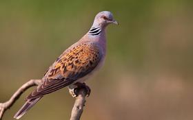 Картинка птица, ветка, боке