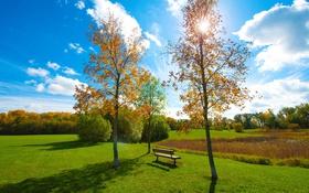 Картинка пруд, трава, скамья, деревья, небо, парк, осень