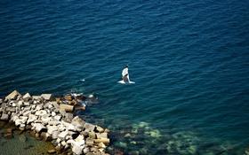 Обои море, вода, камни, океан, белая, чайка. птица