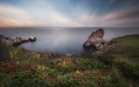 Картинка море, пейзаж, цветы, скалы, красота