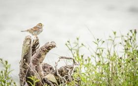 Обои bird, singer, singing, rainy