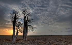 Обои nature, sunset, cloud
