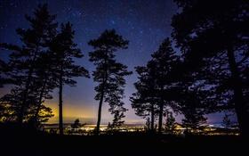 Обои деревья, ночь, огни, силуэт, Швеция