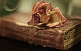 Обои книга, фон, роза, макро