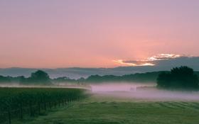 Обои поле, небо, трава, облака, закат, туман, холмы