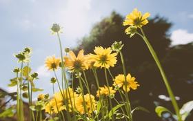 Обои желтые, лепестки, цветы