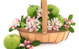 Обои цветы, корзина, яблоки