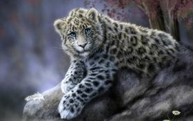 Обои кошка, животное, камень, ромашки, леопард, ирбис, снежный барс