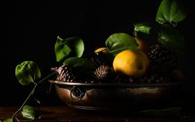 Обои фон, лимон, ветка