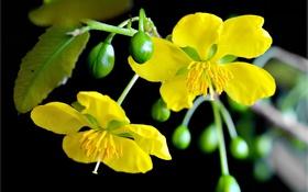 Картинка цветы, фон, растение, стебель