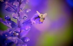 Обои цветок, муха, растение, насекомое