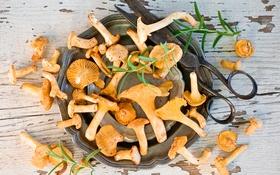 Обои грибы, миска, ножницы