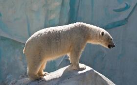Обои камень, профиль, белый медведь, полярный