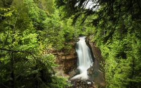 Картинка лес, деревья, скала, ручей, камни, обрыв, водопад