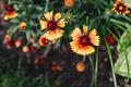 Картинка цветы, лепестки, желтые