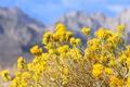 Картинка небо, цветы, горы, растение