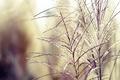 Картинка трава, закат, нежность, растения