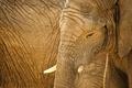 Картинка слоны, фон, природа