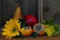 Картинка цветок, листья, подсолнух, груша, хурма
