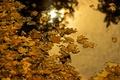 Картинка осень, листья, вода, природа