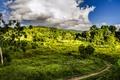 Картинка зелень, небо, трава, облака, деревья, Бразилия, тропинка
