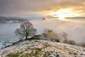 Картинка горы, туман, дерево, утро