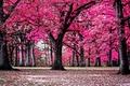 Картинка деревья, природа, парк