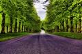 Картинка дорога, лес, трава, деревья