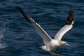 Картинка птица, крылья, чайка, вода, клюв