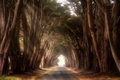 Картинка тоннель, Point Reyes Station, дорога, деревья, Калифорния, США